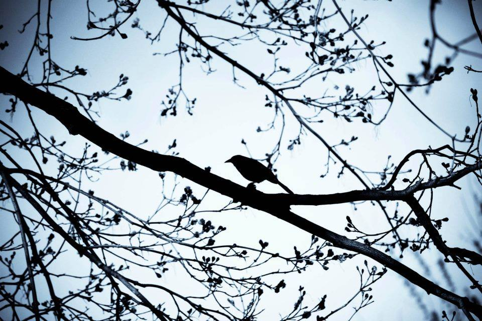 photo by  elena stanton .