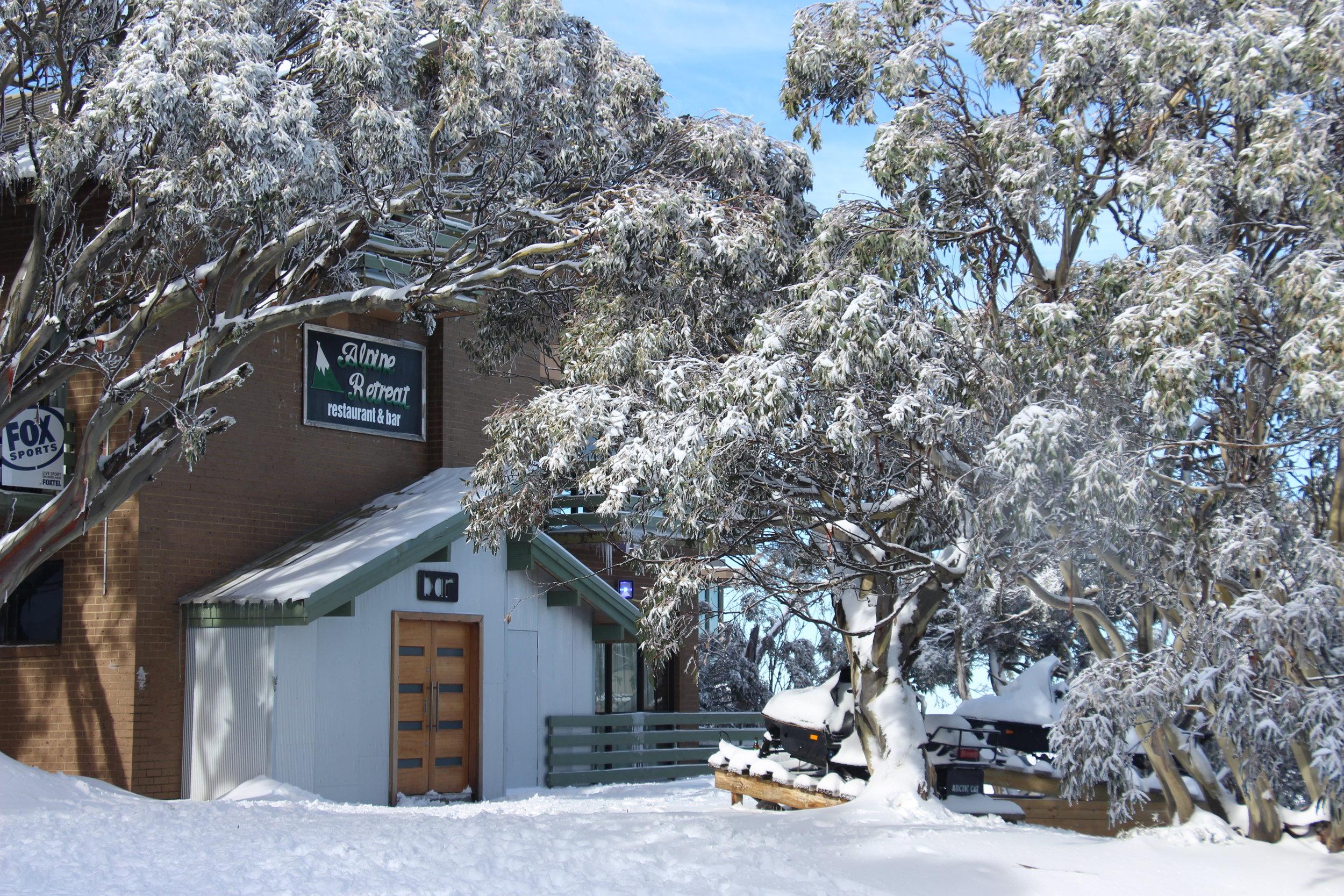 Alpine Retreat Snowgums.JPG