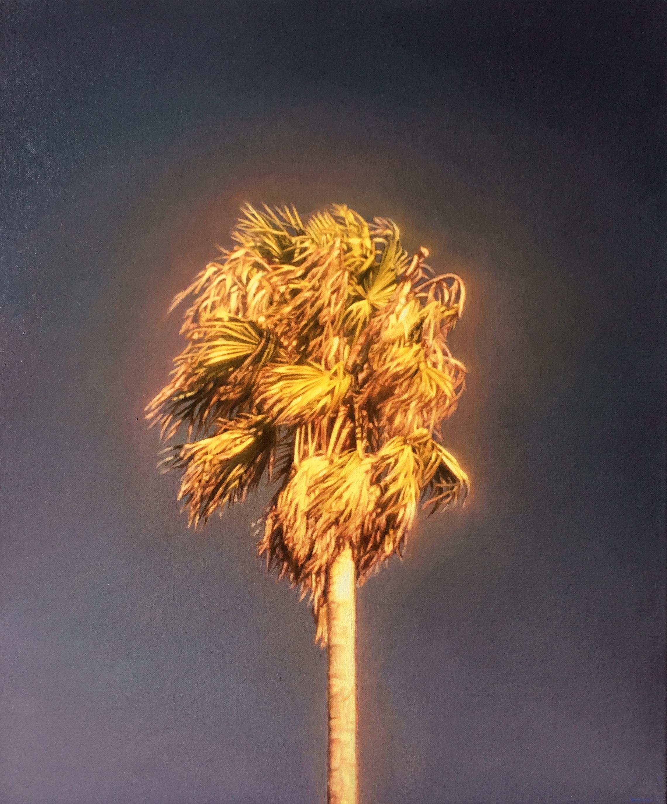 James Bonnici, Palm (Preston) oil on linen, 51 x 61 cm, available