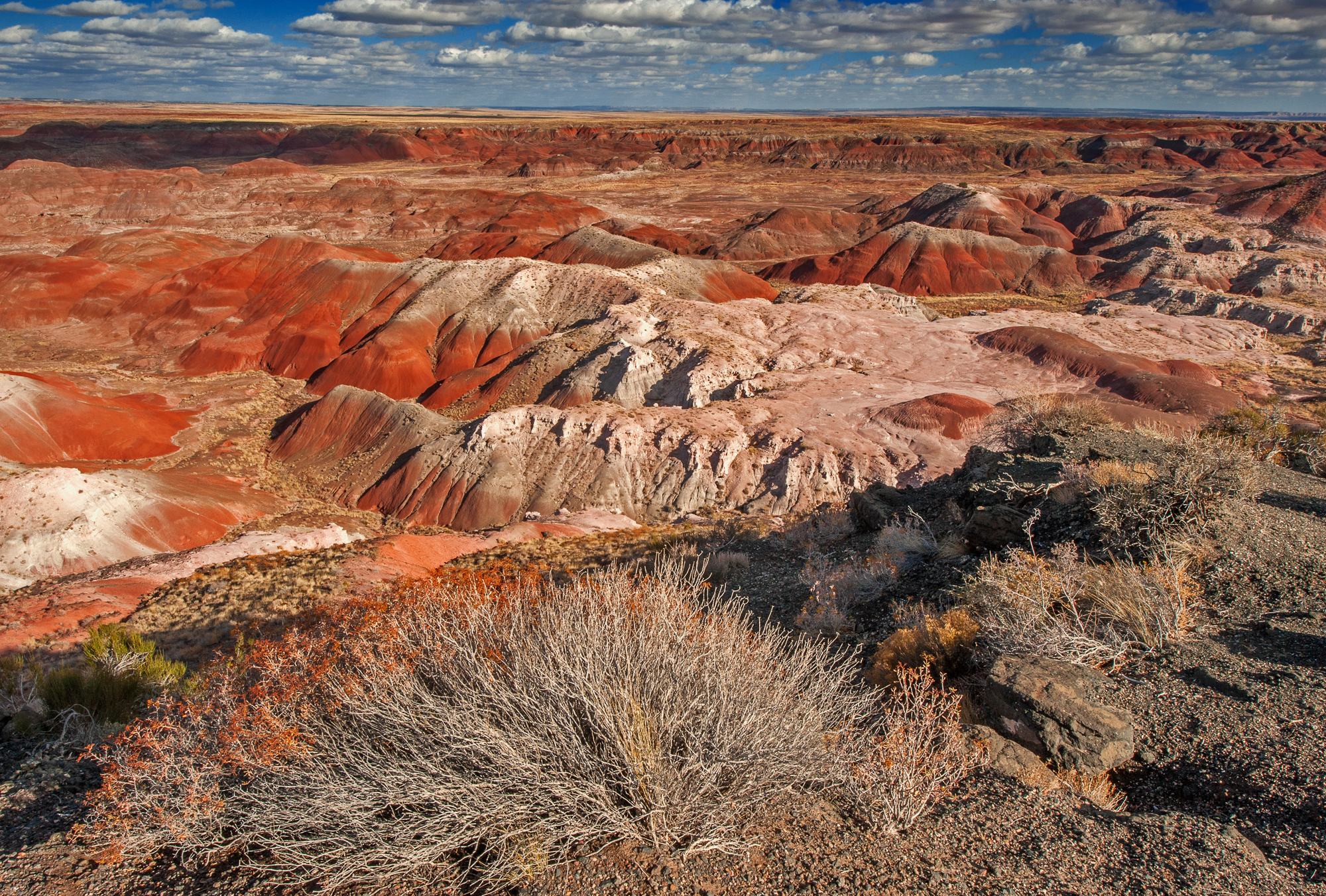 Painted Desert Flora and Badlands