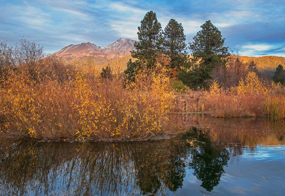 Mount Shasta in Divine Light