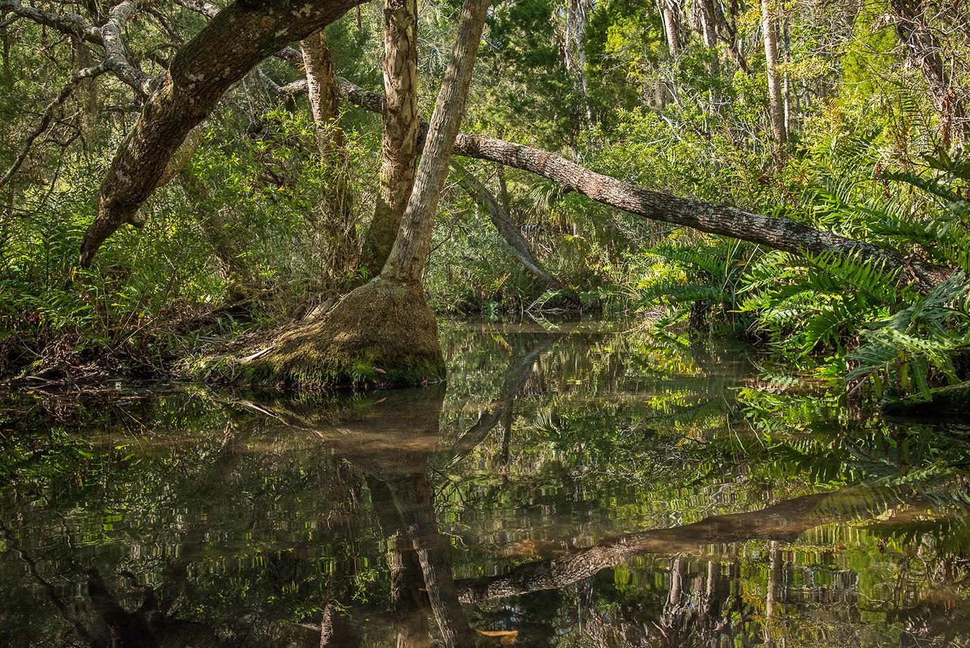 Baird Creek, Primeval Paradise (off the Chassahowitzka River)