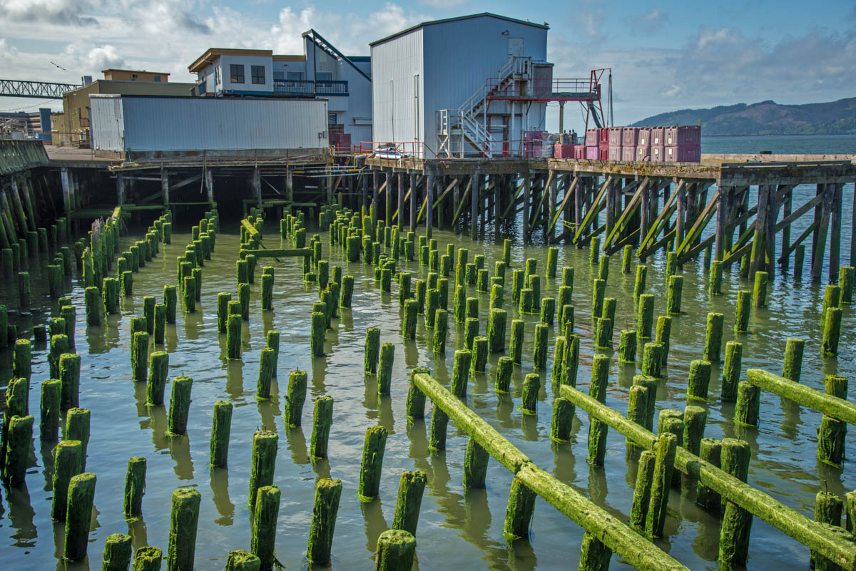 Algae-Covered Pilings ©Lynne Buchanan  In the late afternoon light, the bright green color was even more evident.