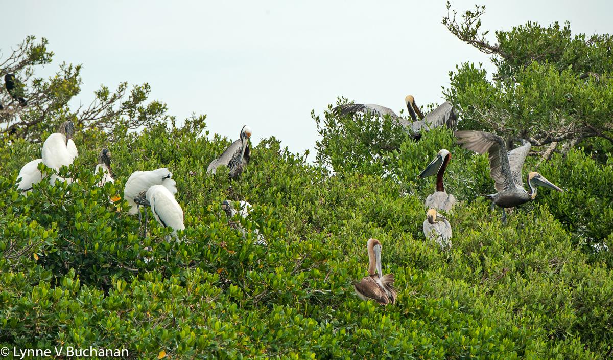 Roosting on Bird Island