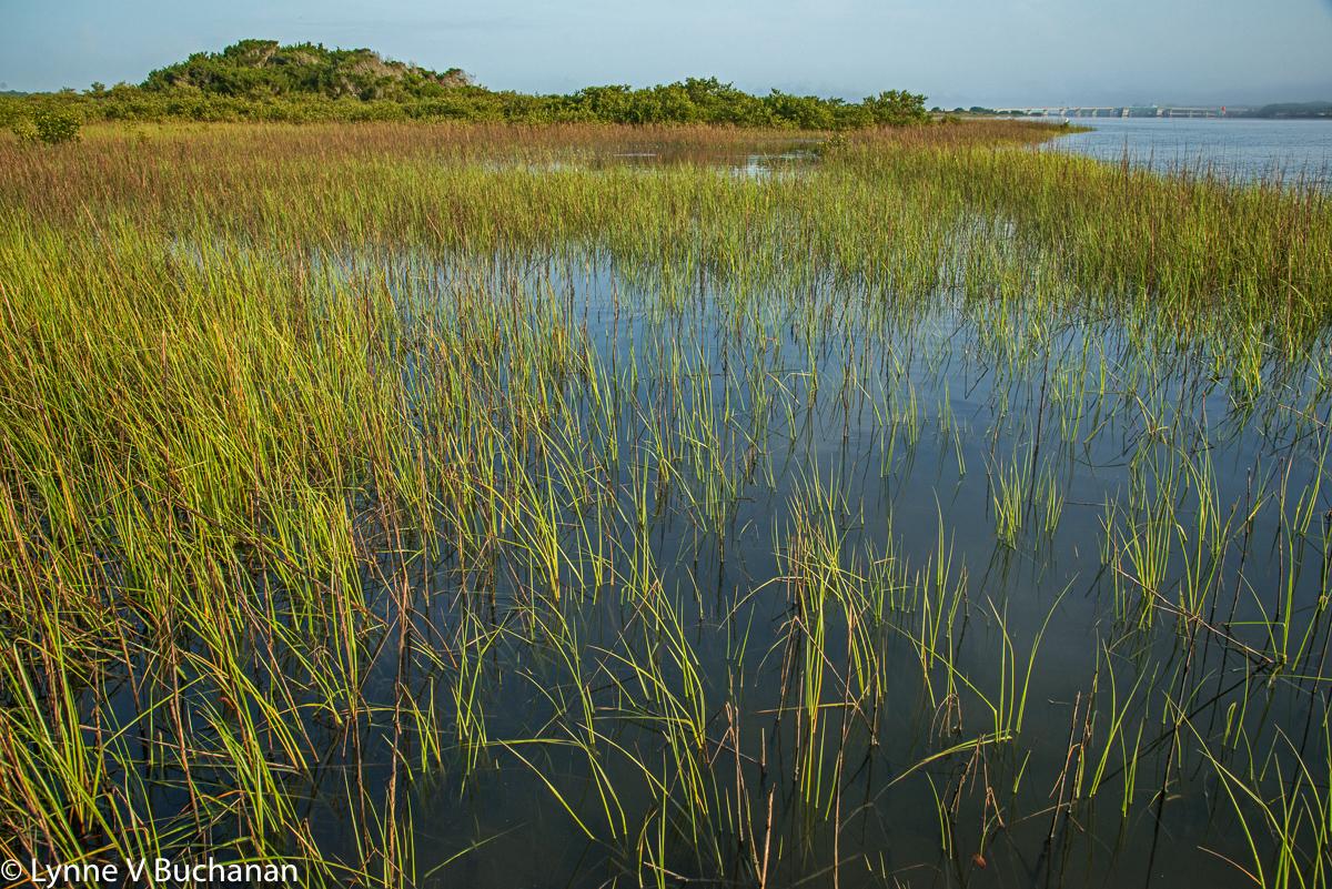 Sea Grasses in the Morning Light