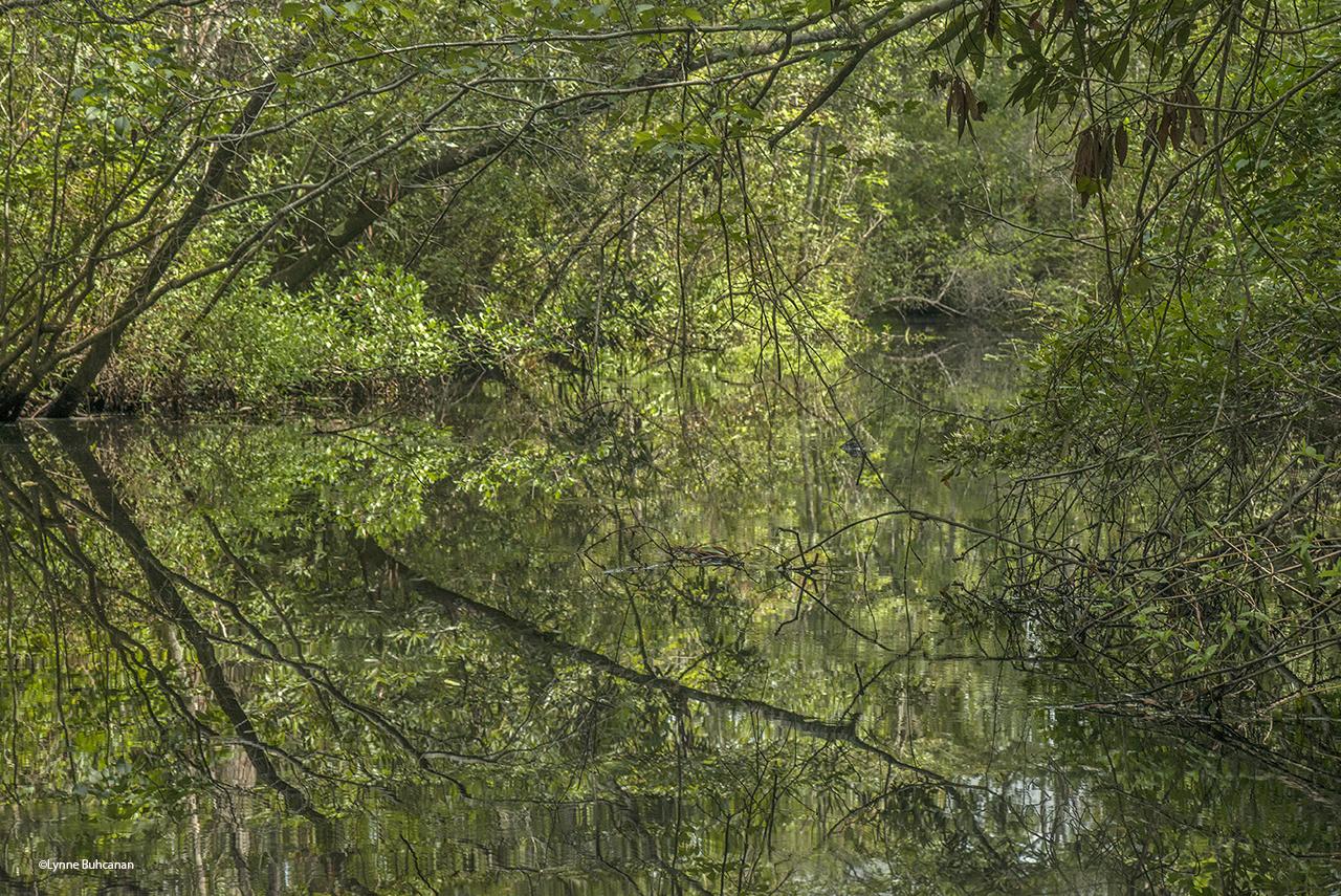 The Pine Log Maze