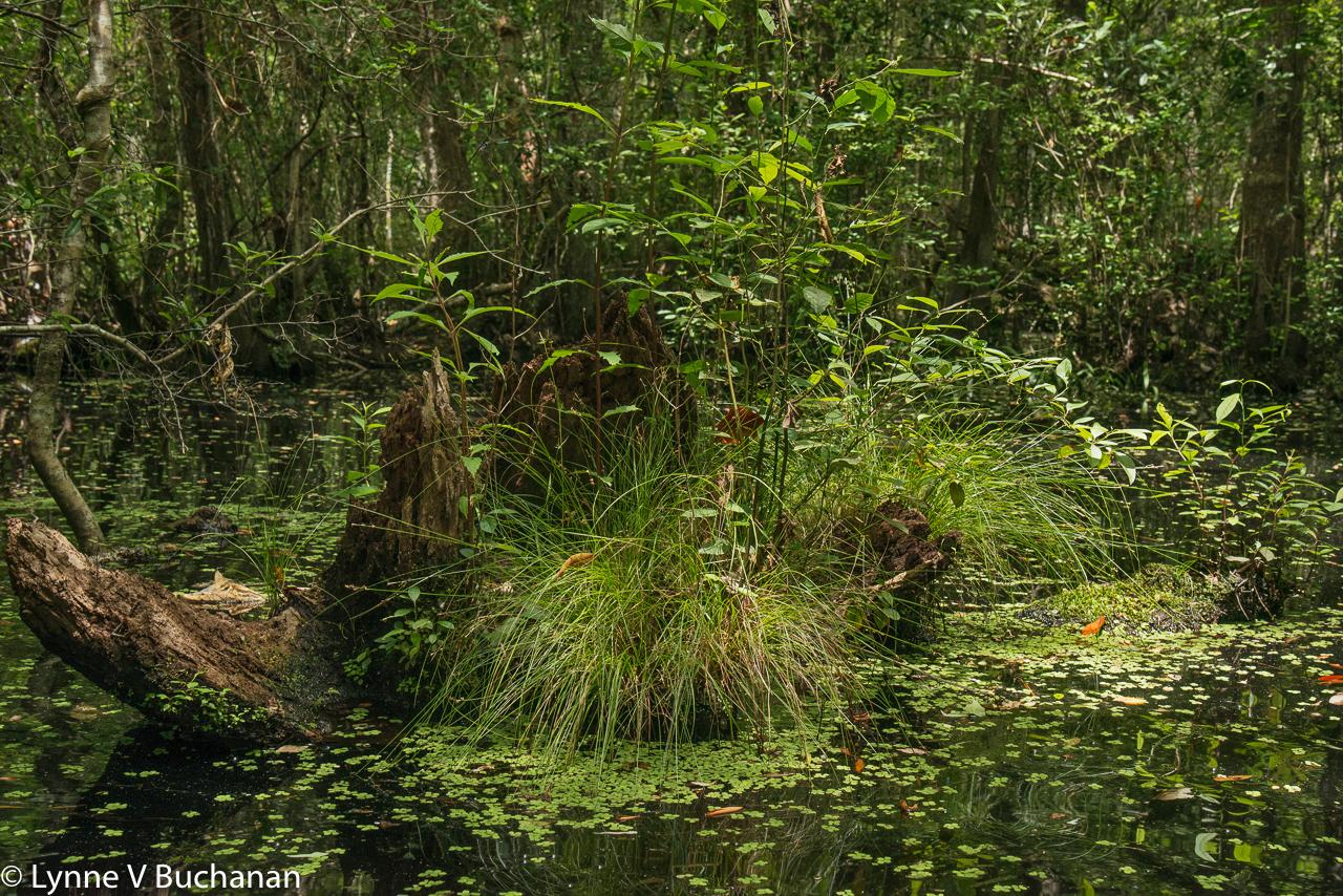 Miniature Island in Pine Log Creek