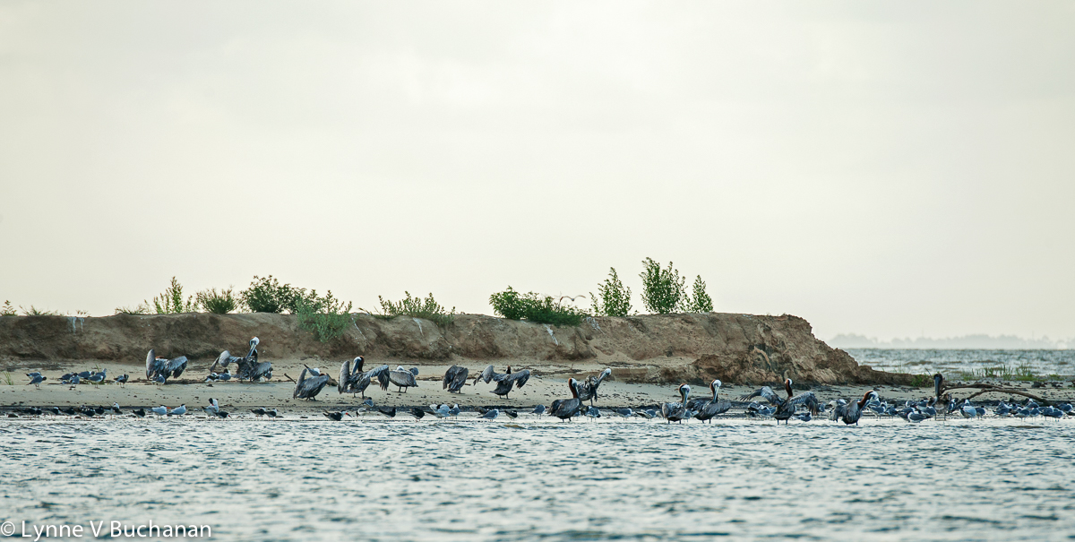 Standing Room Only, Bird Island