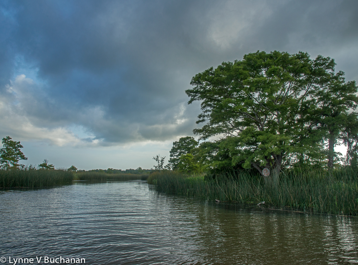 Apalachicola River Intersection