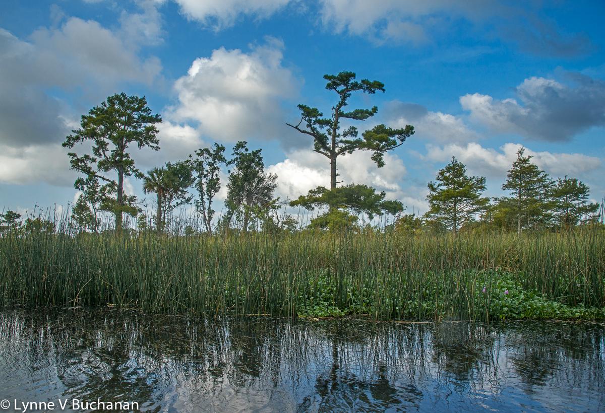 Morning Along the Apalachicola Delta