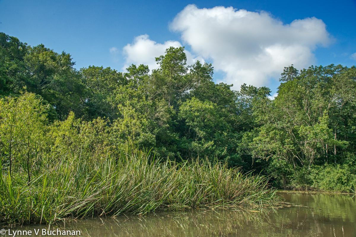 Small Island in the Hidden Lake, Apalachicola River