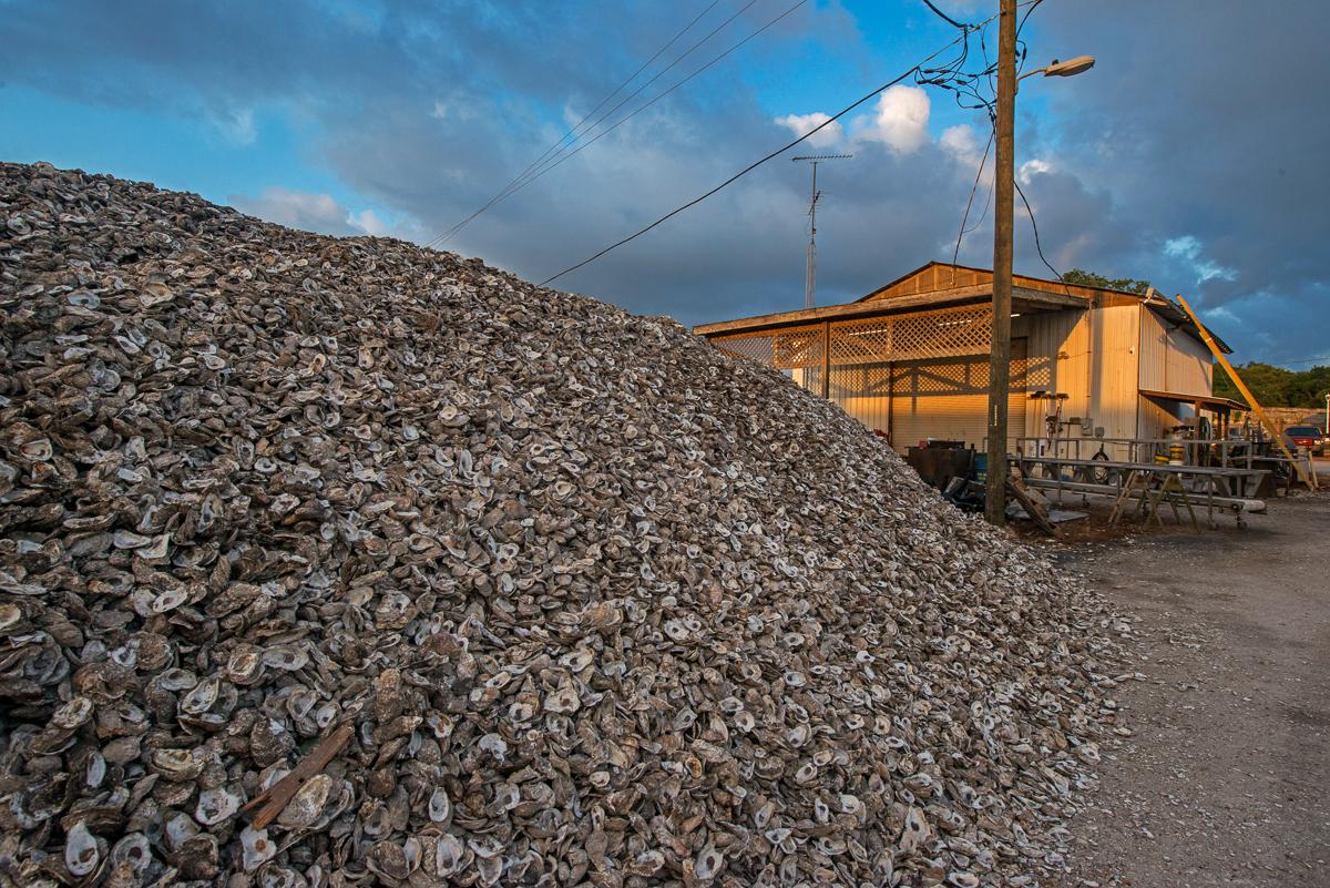 Oyster Shells, Apalachicola