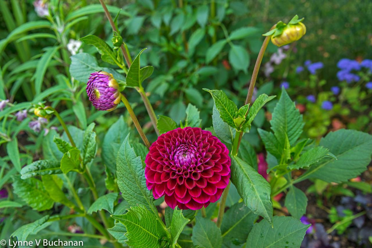 Invitation to Monet's Gardens