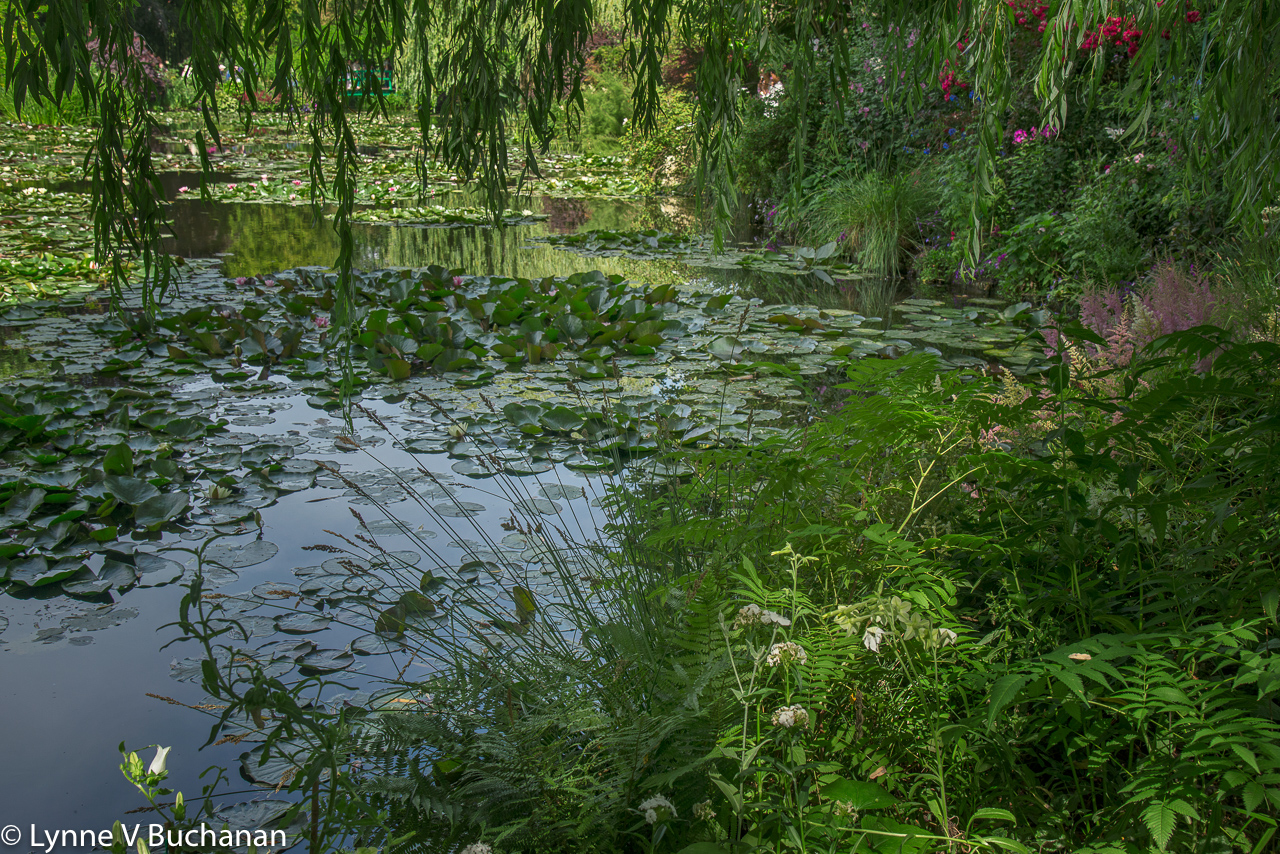 Lily Pond Through the Willows