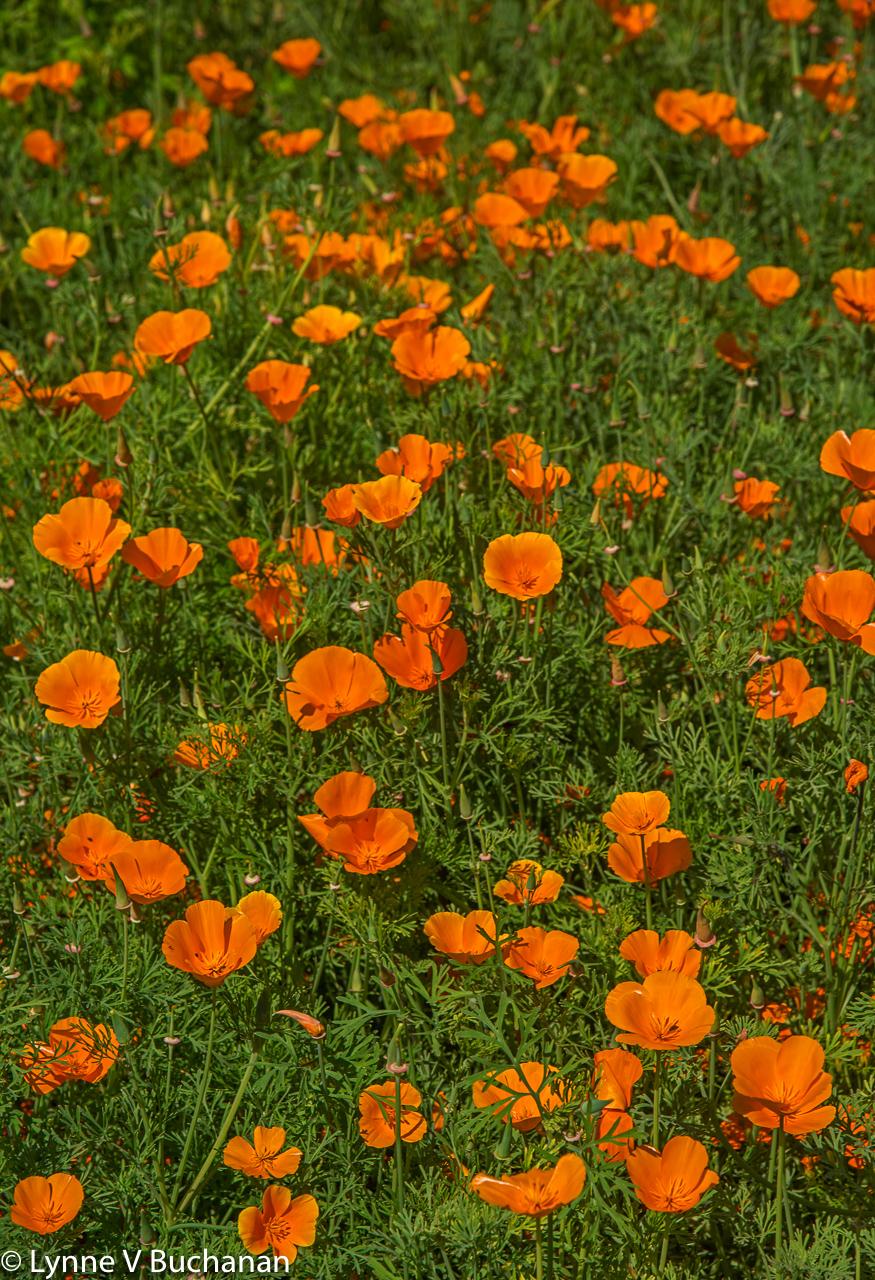 Tapestry in Orange
