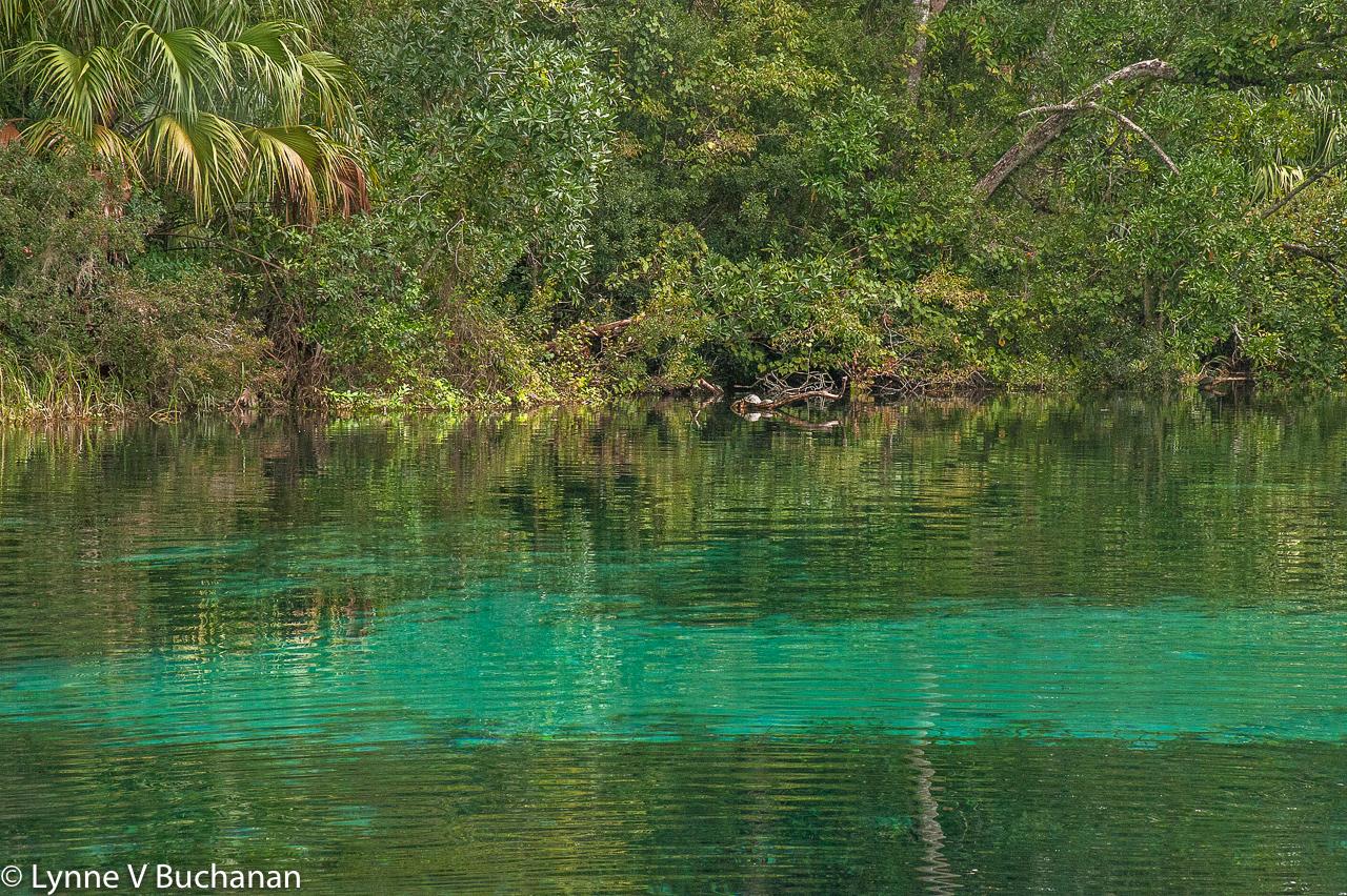 Rainbow Springs Headwaters