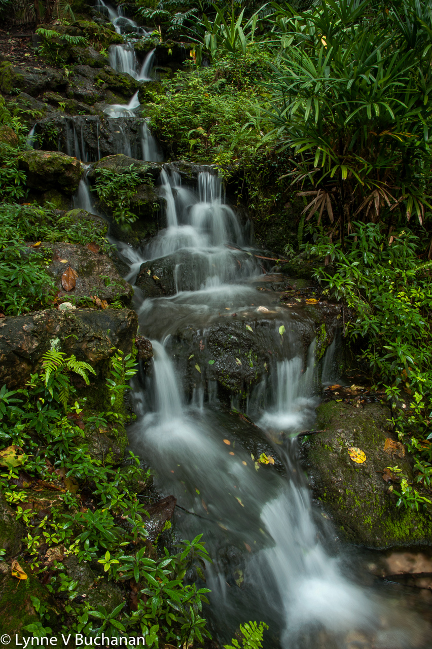 Rainbow Springs Waterfall