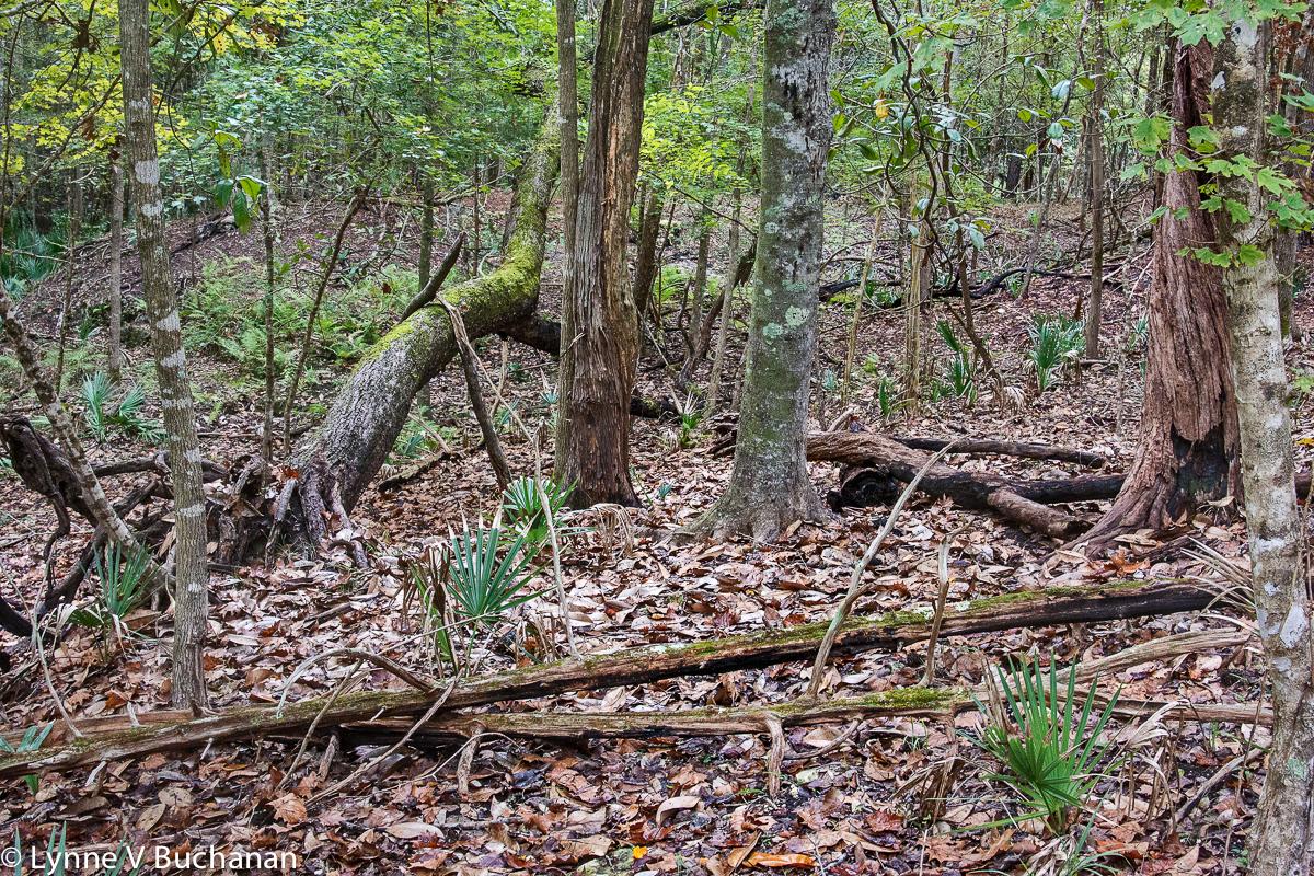 Wild Woods of Torreya State Park