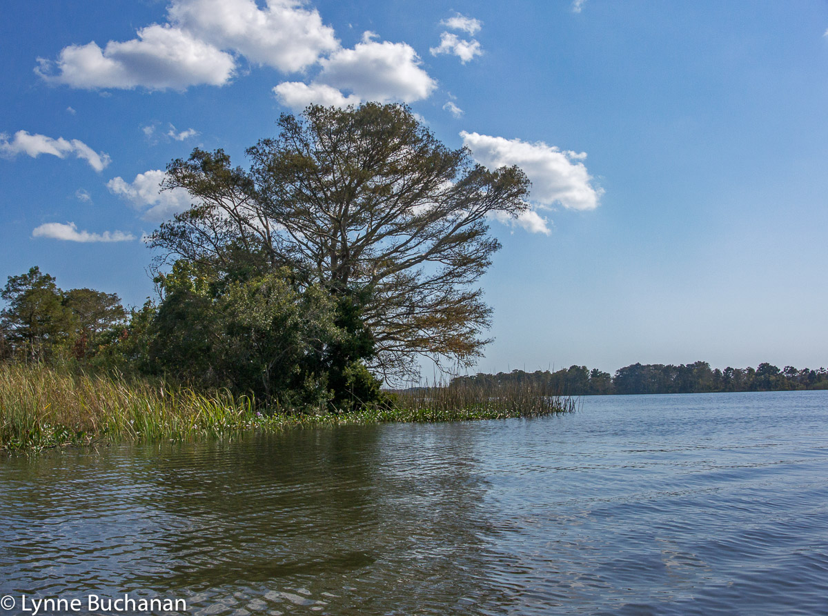 Tree Marking the Apalachicola River