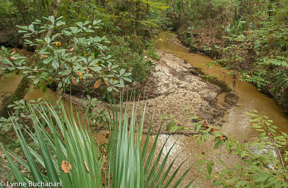 Hogtown Creek Bend