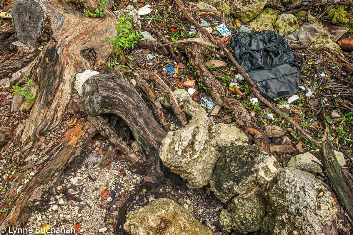 Trash from Biscayne Bay