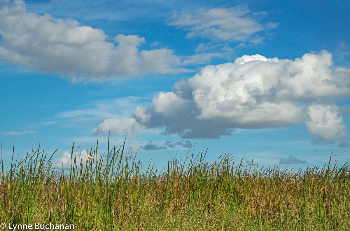 Marsh and Clouds, Kissimmee Lake