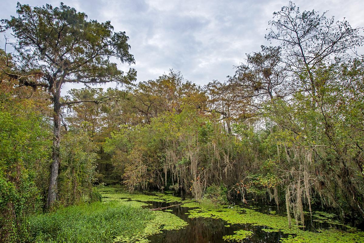 Alligator Hole, Kirby Storter, Big Cypress