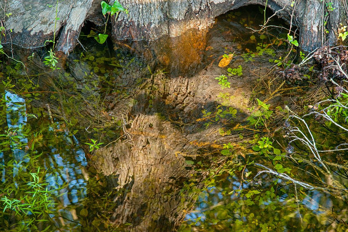 Root Reflections, Blue Springs, High Springs