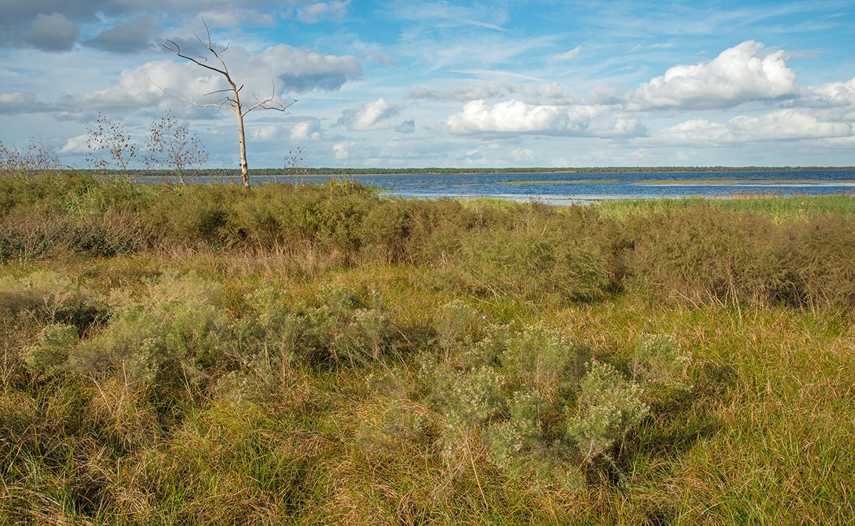 The Banks of Kissimmee Lake
