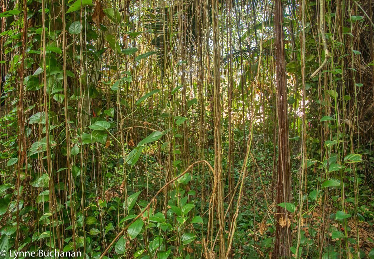 Biosphere Rain Forest