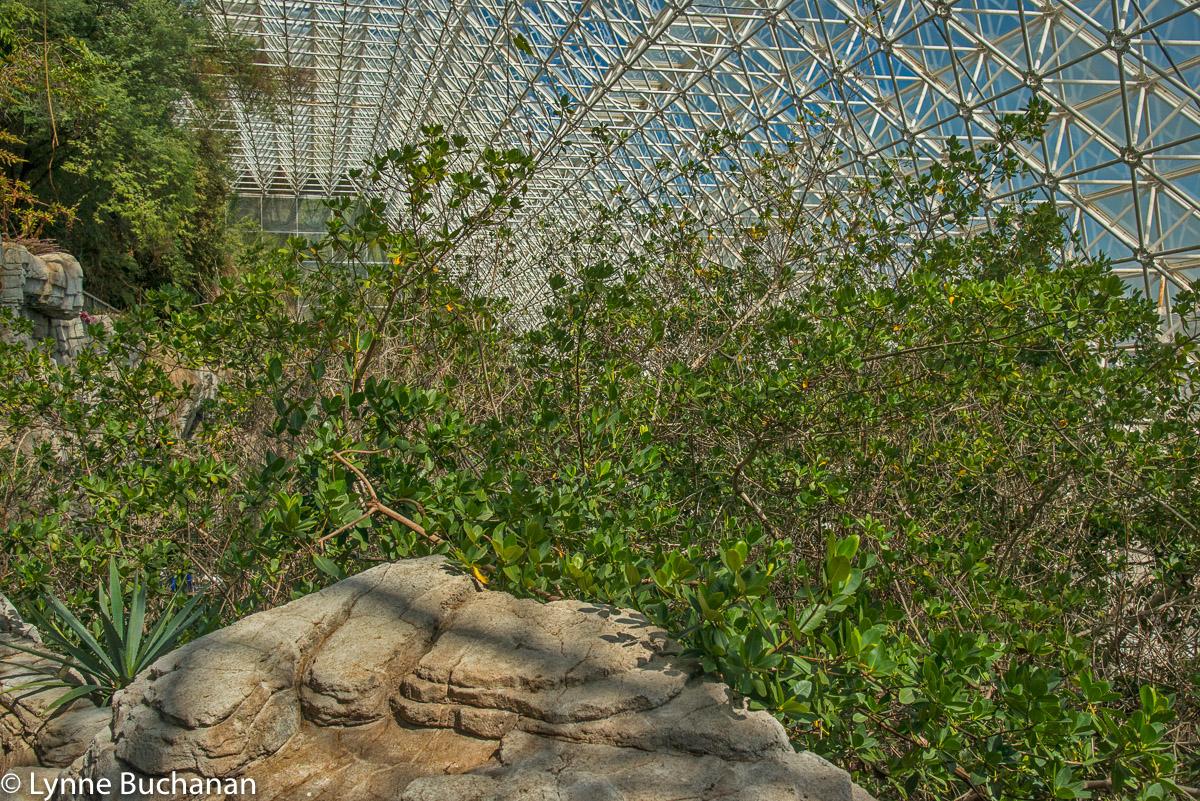 Everglades Mangroves in Biosphere 2