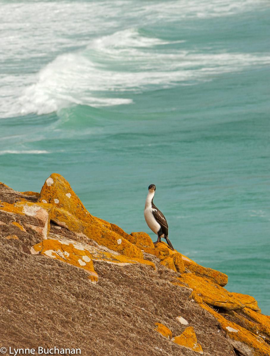 Cormorant by the Sea