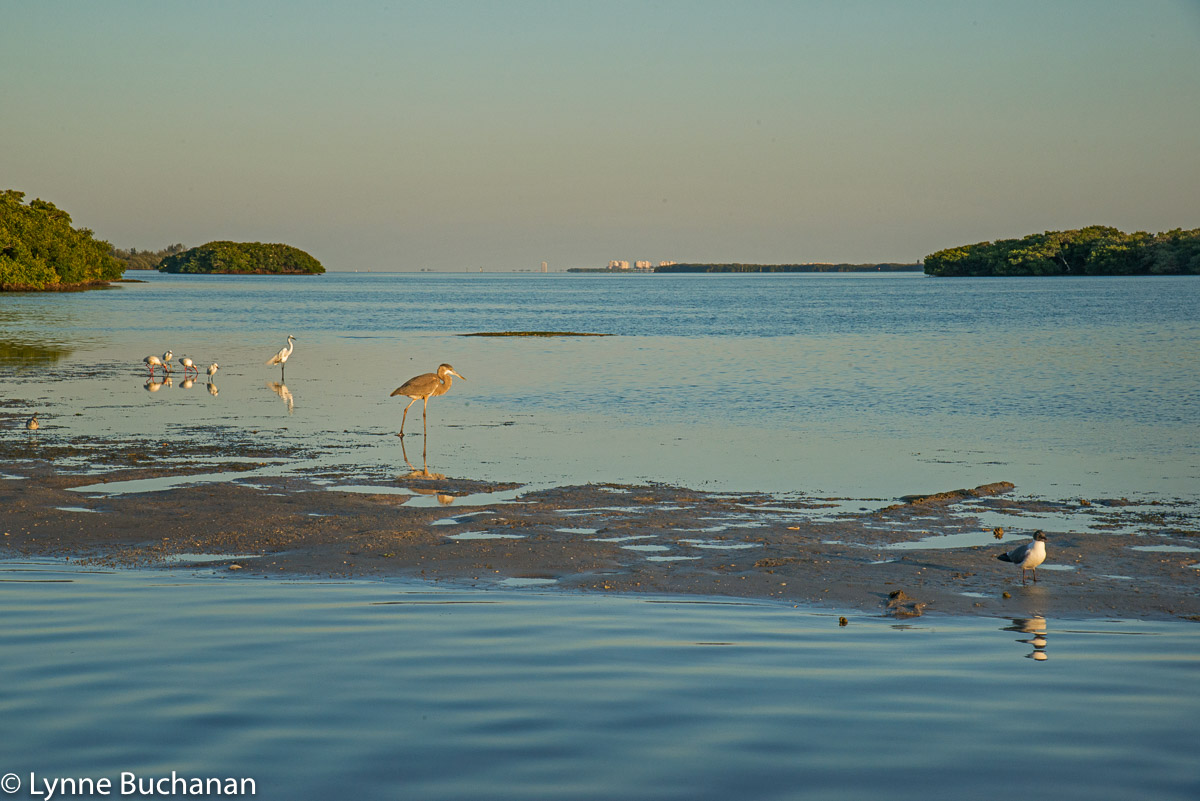 Birds at Dusk, with Sarasota in the Distance