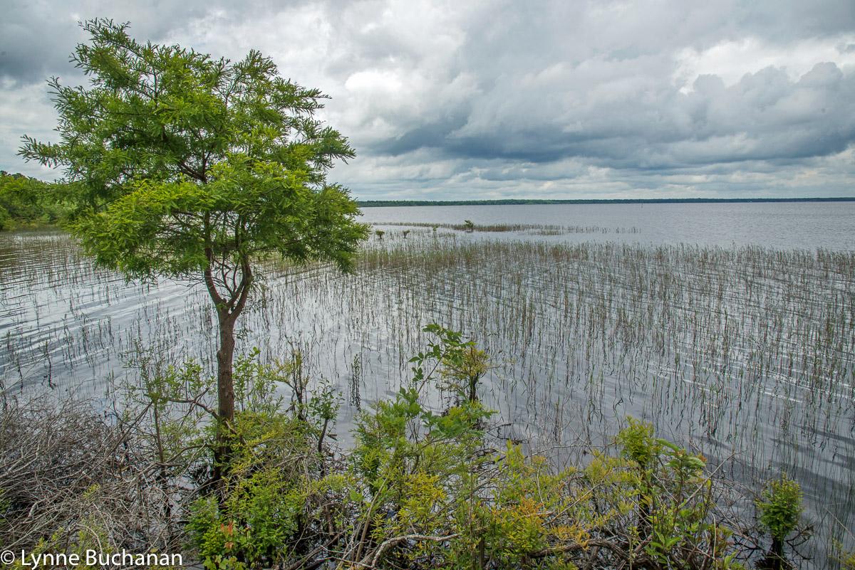 Lake Waccamaw Shoreline