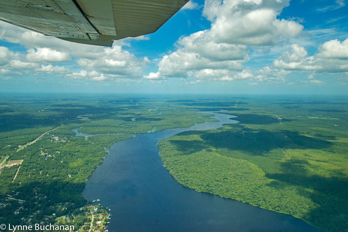 St. Johns River Looking South, with the Confluence of Dunns Creek on the Left and Murphy's Island and Buffalo's Bluff in the Distance