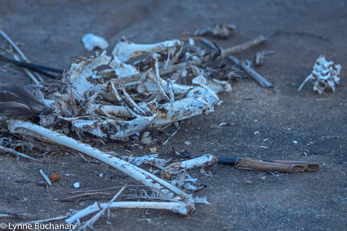 Bird Skeletons, American Creosote Superfund Site