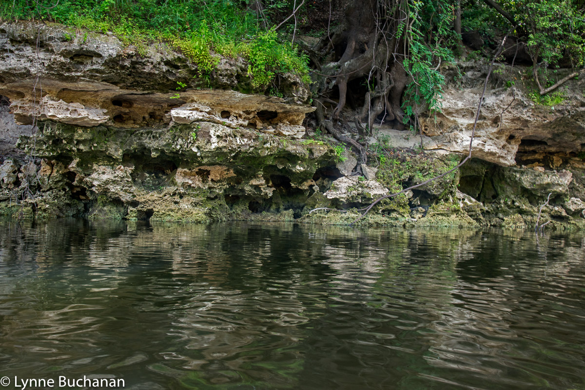 Layers of Caves in the Karst, Upper Withlacoochee