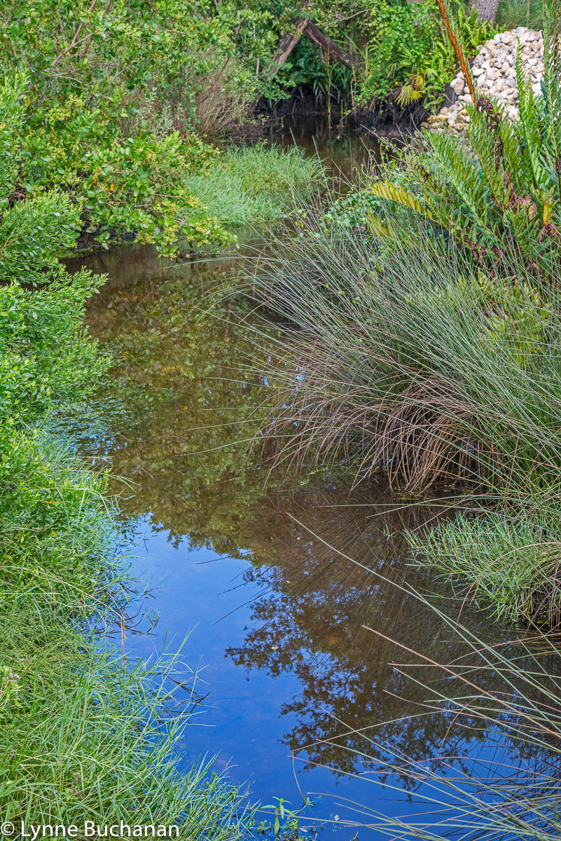 Conservancy of Southwest Florida Filter Marsh with Native Plants
