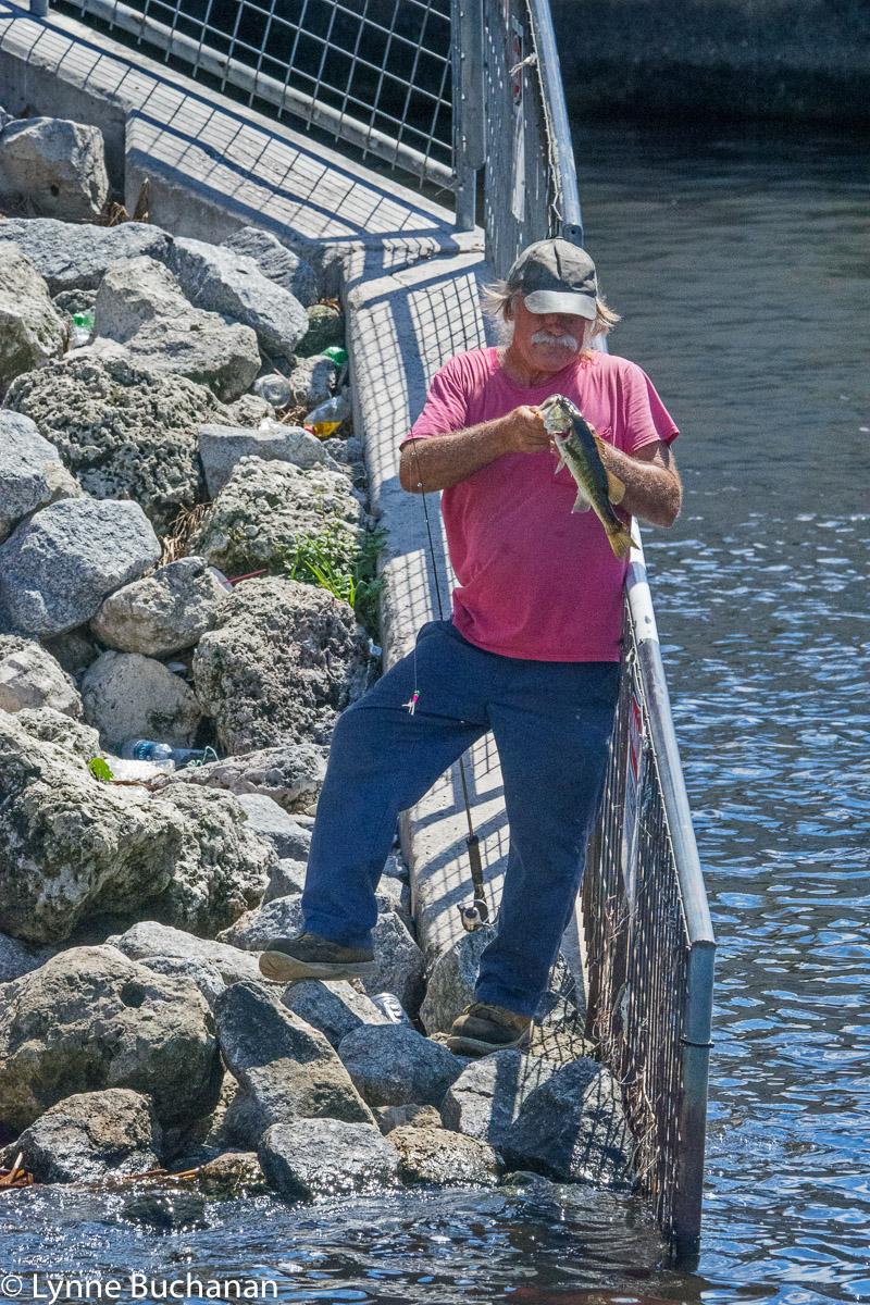 Cutting a Fishing Line to Toss a Toxic Catfish Back into Lake Okeechobee
