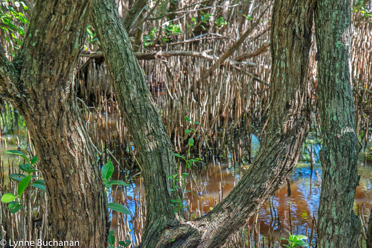 Mangroves Waging the Filtration Battle
