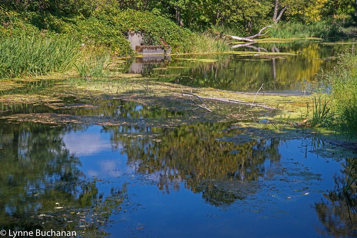 Pond by the Bonneville Fish Hatchery