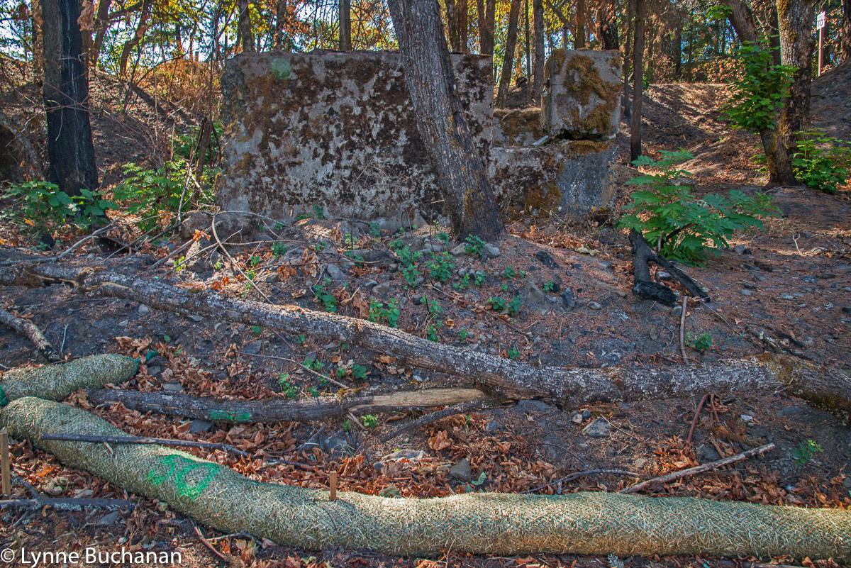 Boom with Ruins Near the Mosier Derailment Site