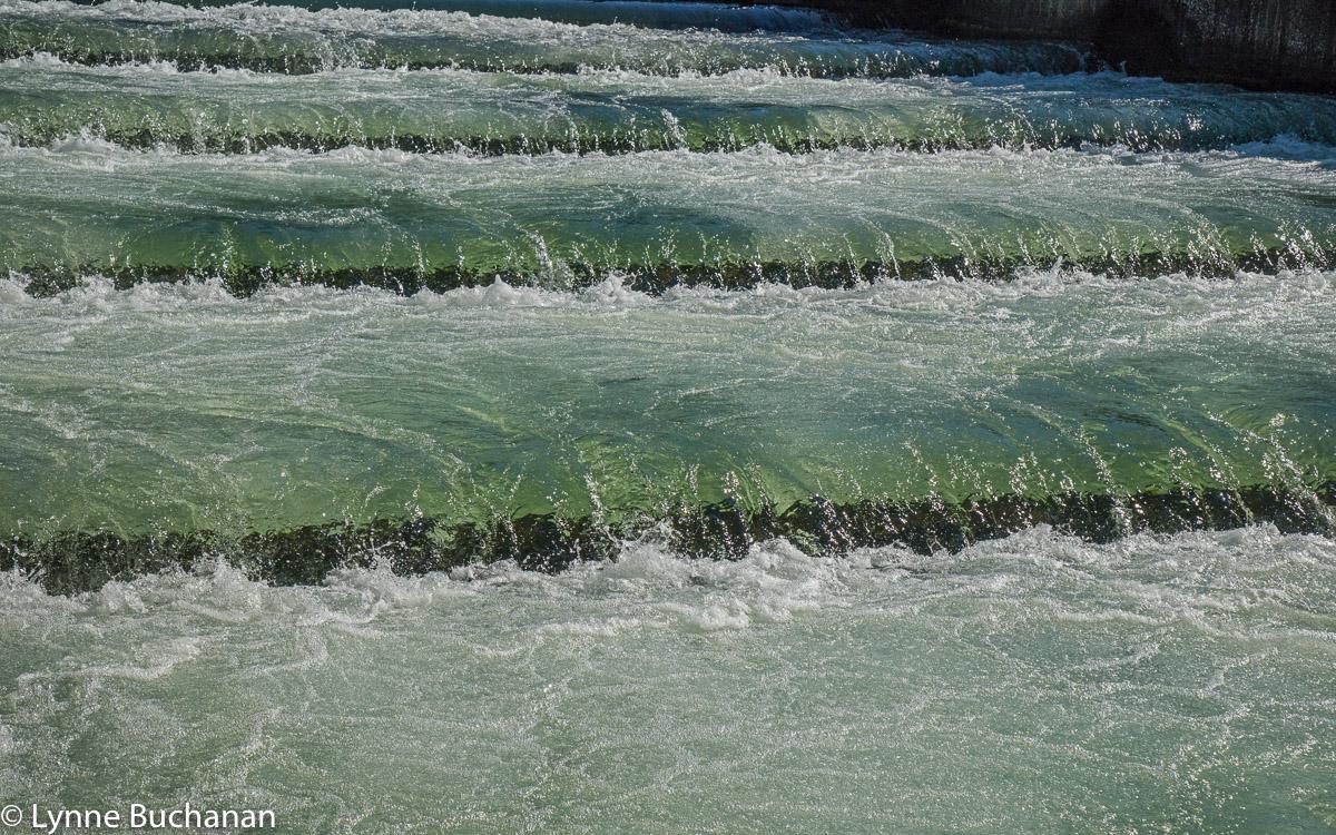 Fish Ladder, Bonneville Dam