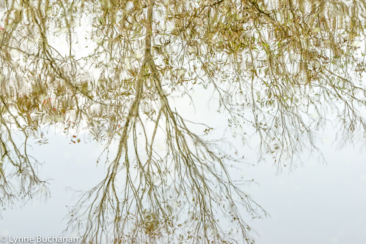 Watery Fall Branches