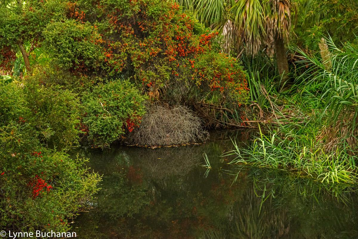 Kanapaha Pond