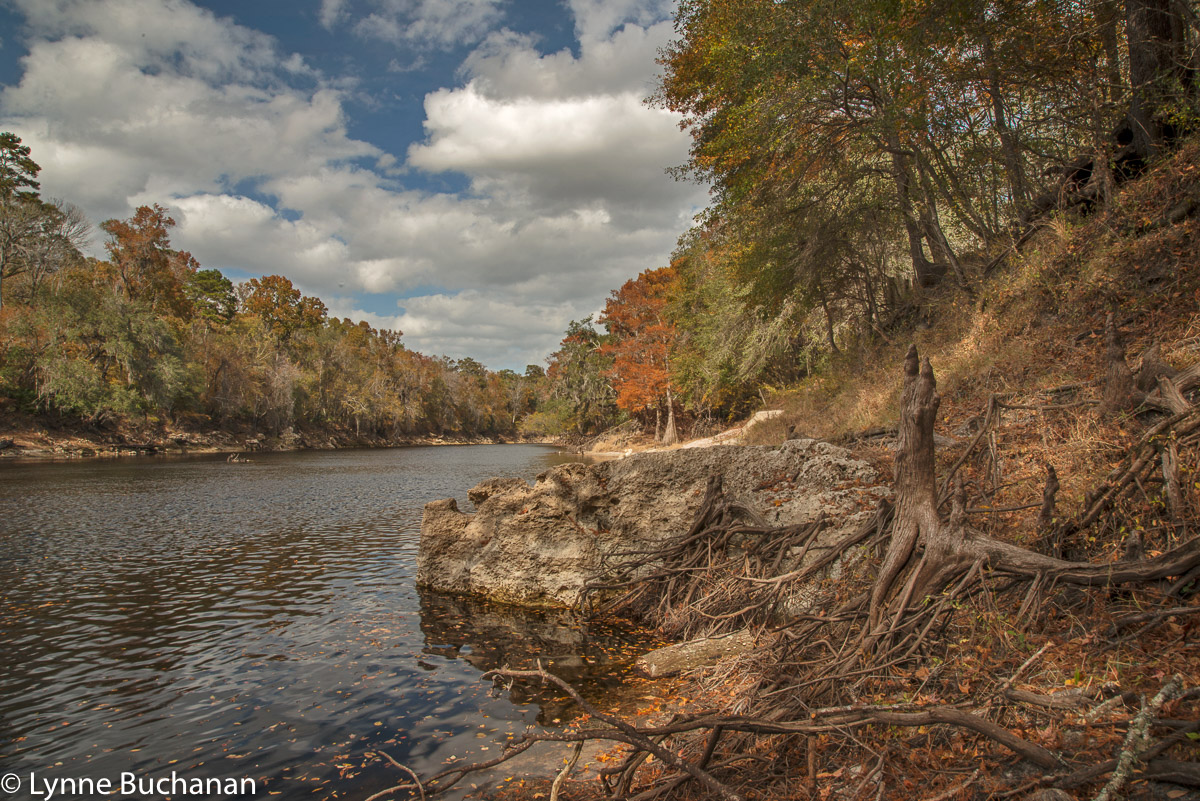 The Banks of the Suwannee in Fall