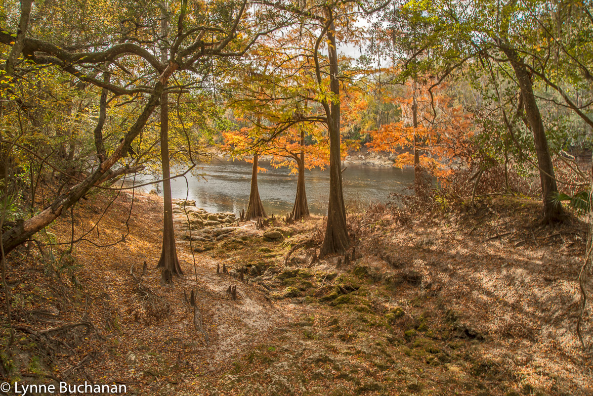 Lime Sink, Suwannee River State Park