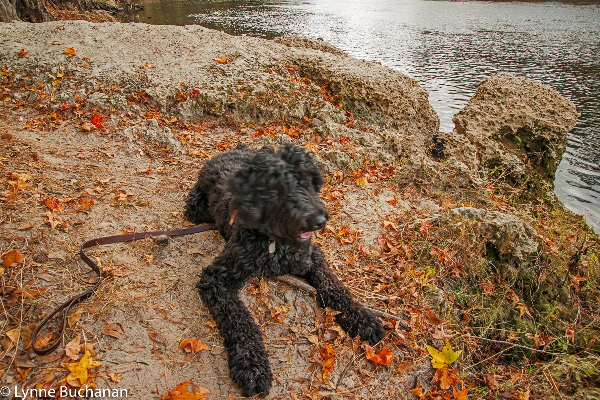 Takoda Watching the River