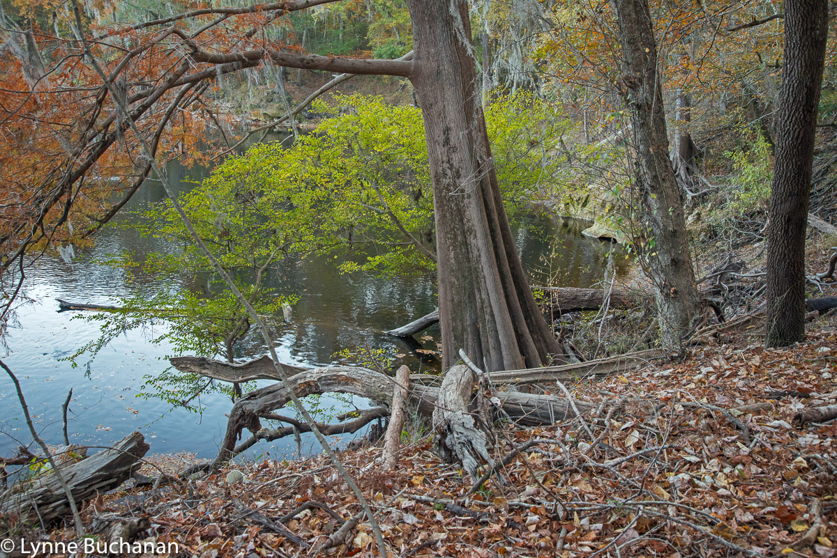 Where the Sabal Trail Pipeline Will Cross the Suwannee River