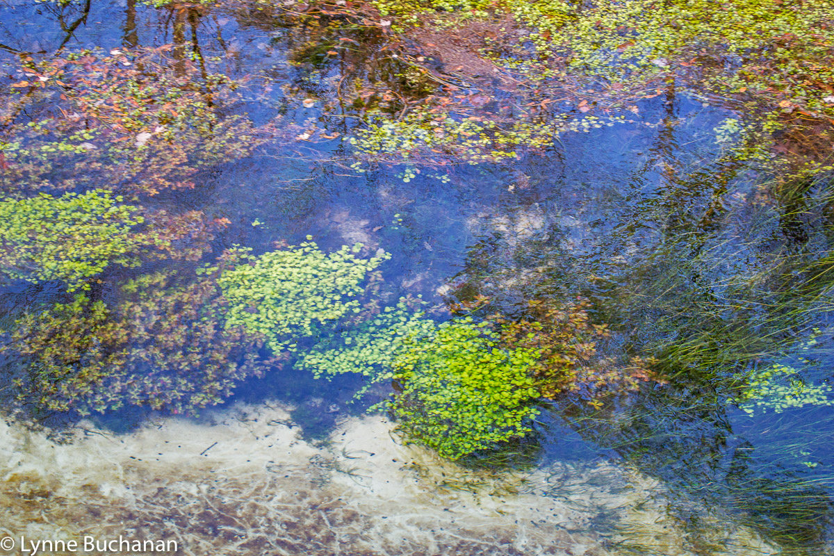 Underwater Vegetation and Reflections